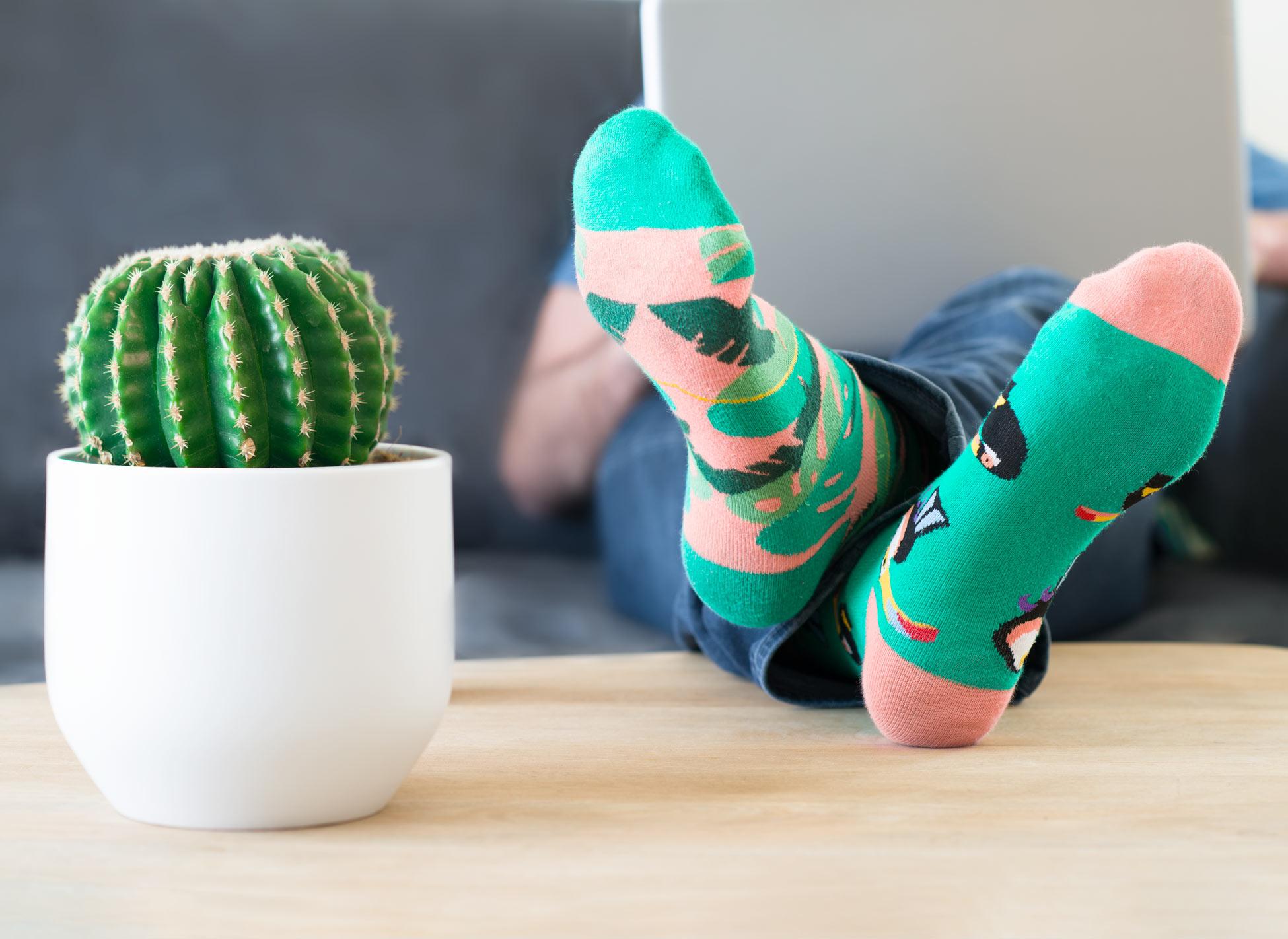 webmarketing, cactus et chaussettes colorées